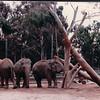 Elephants - San Diego Zoo - San Diego, CA - 1/31/86