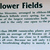 The Flower Fields - Carlsbad, CA  4-1-96