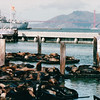 Harbor Seals at Pier 39 - San Francisco, CA  9-7-03