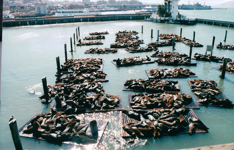 Pier 39 with Harbor Seals - Nature's Sunshine Convention - San Francisco, CA    9-5-03