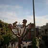sanfrancisco-feb2011-0581-san francisco california lombard