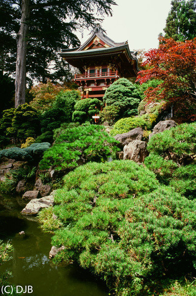 """Japanese Tea Garden at Golden Gate Park San Francisco, CA.<br />  Image Copyright 2013 by DJB. All Rights Reserved.   <a href=""""http://www.DaveXMasterworks.com"""">http://www.DaveXMasterworks.com</a>"""