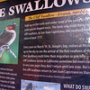 Swallow Information Display - Mission San Juan Capistrano 2-12-07