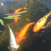 Fish in Fountain - Mission San Juan Capistrano 2-12-07