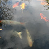 Fish in Fountain - Mission San Juan Capistrano
