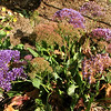 Been Seeing These Purple Flowers in Various Locations - Mission San Juan Capistrano 2-12
