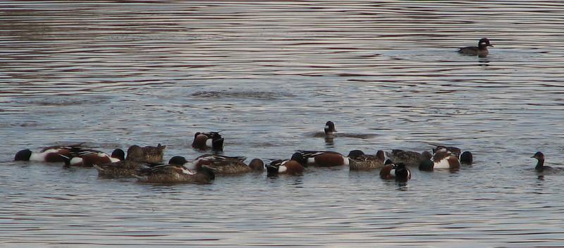 San Joaquin Wildlife Sanctuary 2-12