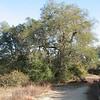 Finally a Nature Trail With Trees - Santa Rosa Plateau Ecoglogical Reserve - Murrieta, CA  2-15-07