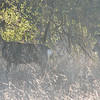 Doe and Fawn - Mule Deer - Santa Rosa Plateau Ecoglogical Reserve - Murrieta, CA  2-15-07