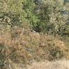 Pretty Habitat - Santa Rosa Plateau Ecoglogical Reserve - Murrieta, CA  2-15-07
