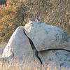 Critters on the Rock - Santa Rosa Plateau Ecoglogical Reserve - Murrieta, CA  2-15-07