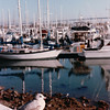 Gull at Seaport Village, San Diego, CA - 1/28/86