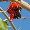 Close-up of Bloom on Tree - Seaport Village - San Diego 2-13-07