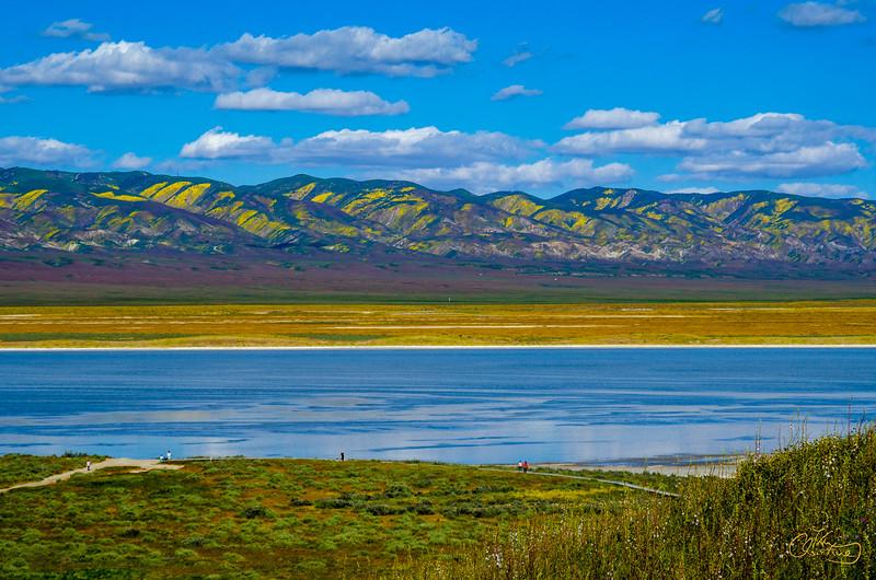 Carrizo Plain National Monument Super Bloom