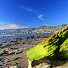 01-05-15_7690_Jalama Tide Pools.JPG