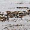 2021-07-20_36_Morro Bay_Raft of Otters.JPG