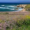 9889_Coon Creek Beach_03-19-15.JPG