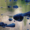 Rocks in the river.  They are blue from reflecting the clear sky.