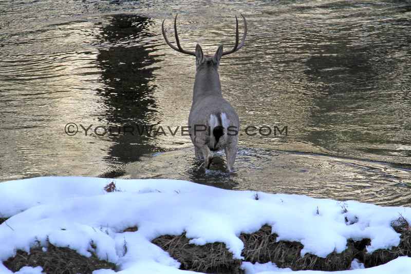 2016-12-06_Yosemite_Deer_1.JPG