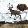 2016-12-06_Yosemite_Deer_6.JPG