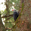 2016-12-05_7646_Yosemite Falls_Woodpecker.JPG