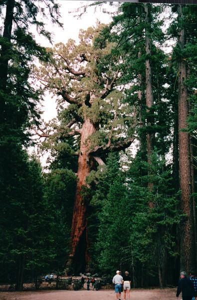 Mariposa Grove of Giant Sequoias - Yosemite National Park  9-9-03