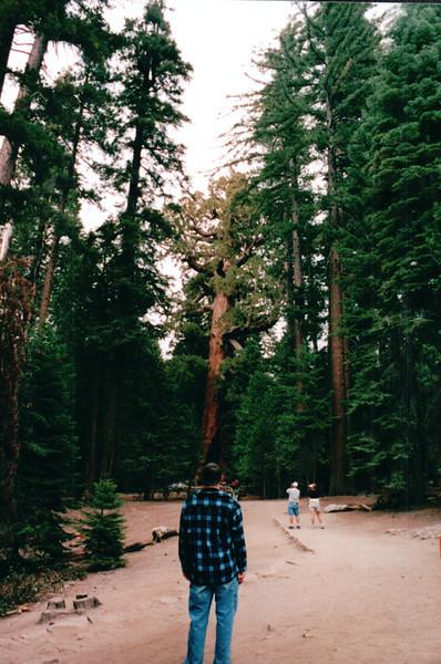 Ben on Trail Walk - Mariposa Grove - Yosemite National Park  9-9-03
