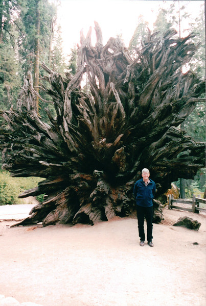 Randal by Roots of Fallen Sequoia - Yosemite National Park  9-9-03
