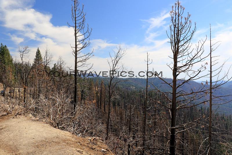 2019-06-11_57_Yosemite_Fire Damage.JPG