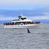 2019-06-19_352_Moss Landing_Orca_Velocity.JPG<br /> Moss Landing Orcas