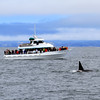 2019-06-19_354_Moss Landing_Orca_Velocity.JPG<br /> Moss Landing Orcas