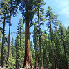 2019-06-11_5_Yosemite_Mariposa Grove.JPG
