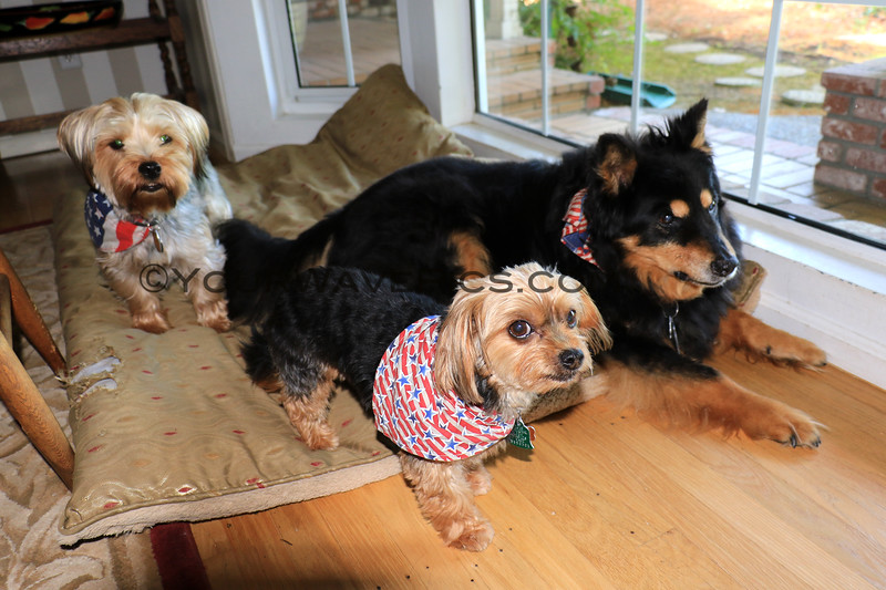 2019-06-17_231_Chip_Rocky_Rex.JPG<br /> <br /> Donna's 3 perros