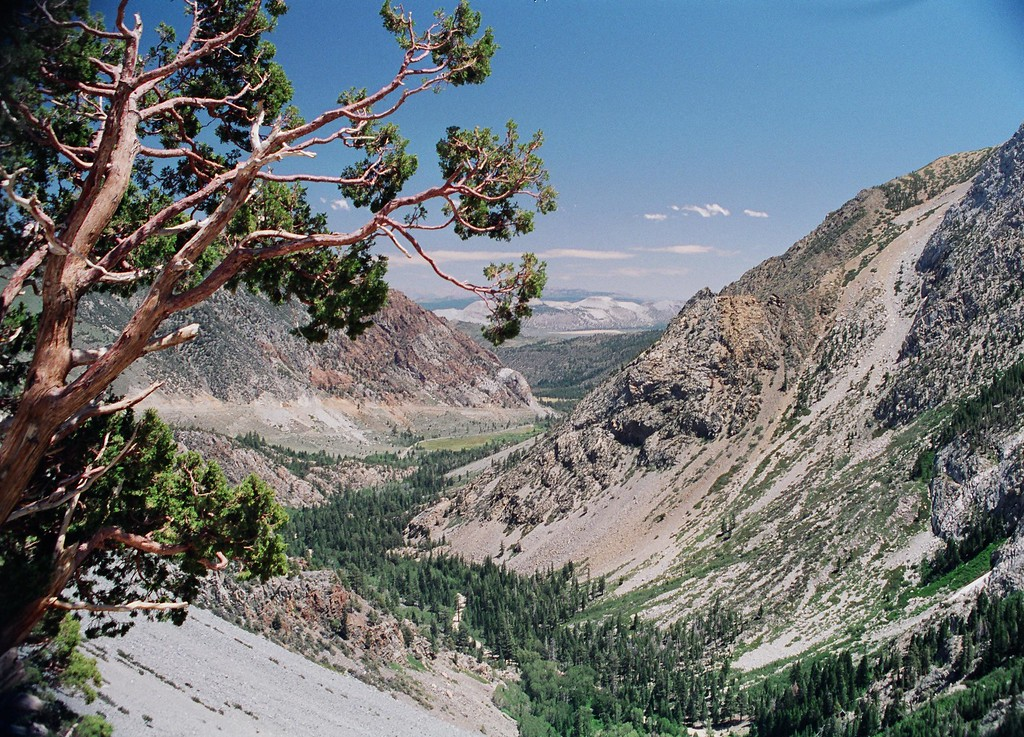 Tioga Pass looking east.