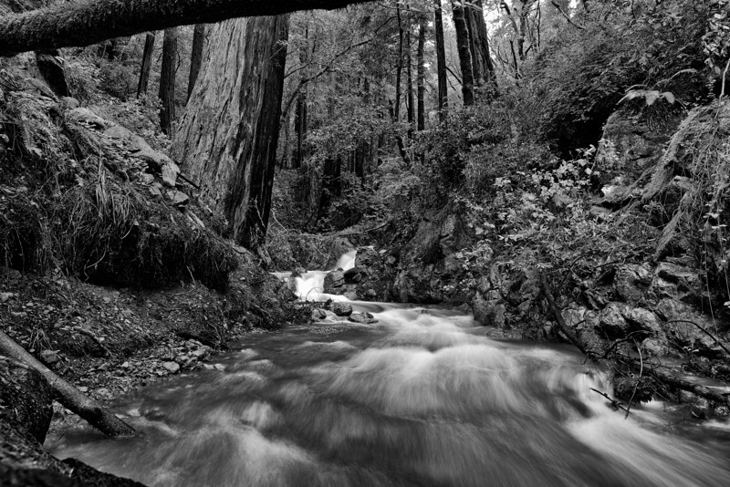 Rushing past - Mill Valley, CA
