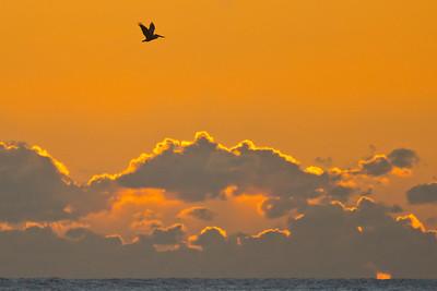 Flying bird @ Pebble beach