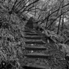 Stairs - Mill Valley, CA