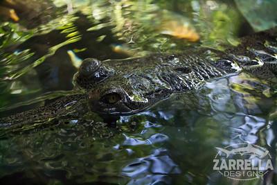 San Diego Zoo (San Diego, California)