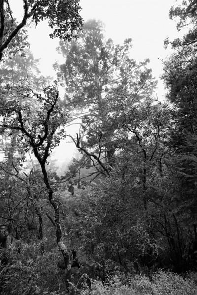 Misty morning - Mill Valley, CA