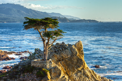 Lone Cypress tree 17 mile beach