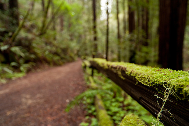 Mossy fence - Mill Valley, CA