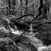 Creeking - Mill Valley, CA