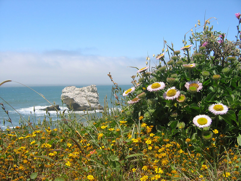 Looking out from Arch Rock, Point Reyes, CA