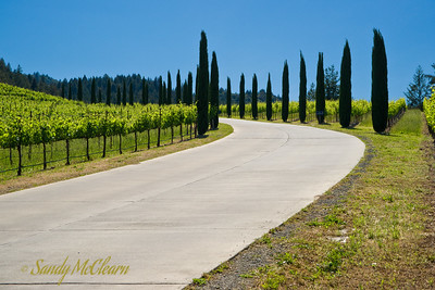 The road approaching the Castello di Amorosa winery.