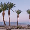 Palms, Borrego Springs