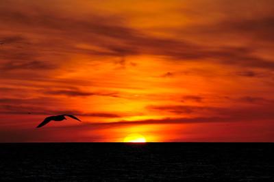 Sunset and Pelican, Venice Beach