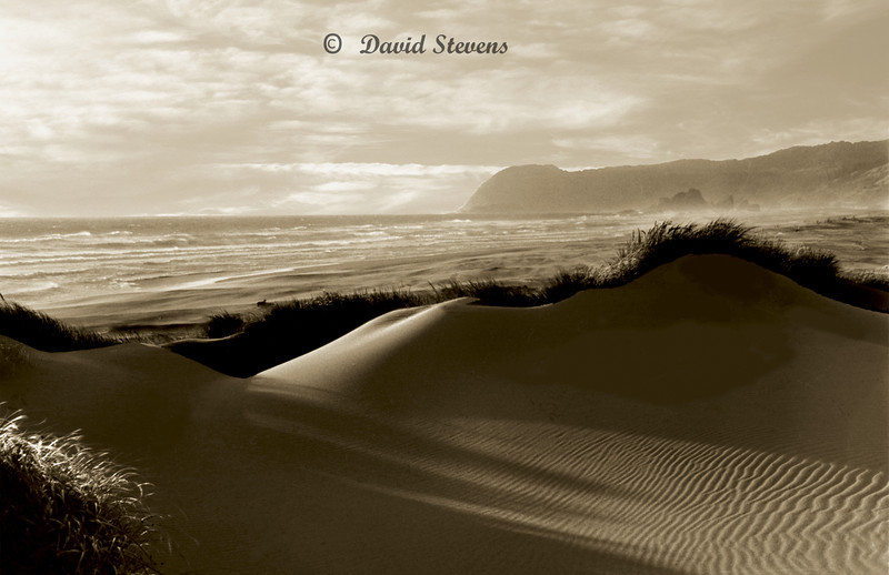 Dunes grass and ocean