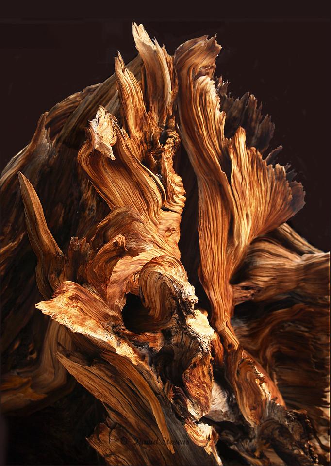 Bristlecone color