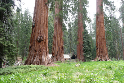 Mariposa Grove, Yosemite NP