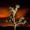 Joshua tree moon and stars. Joshu Tree national park.